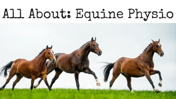 All-About-Equine-Physio Physio for Horses Too? equine physio equine rehab horse rehab jena beckett leduc physio