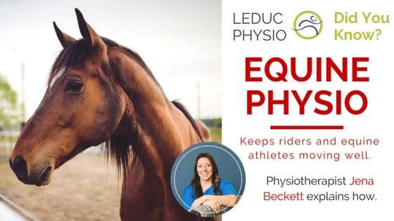 Blog-Titles-10 Physio for Horses Too? equine physio equine rehab horse rehab jena beckett leduc physio